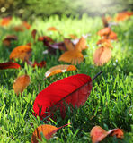 Foglie di autunno variopinte in parco soleggiato Fotografie Stock