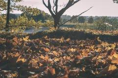 foglie di autunno variopinte - sguardo d'annata del film Fotografie Stock Libere da Diritti