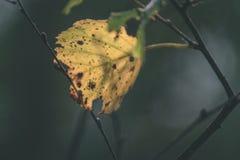 foglie di autunno variopinte - sguardo d'annata del film Fotografie Stock