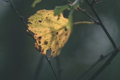 foglie di autunno variopinte - sguardo d'annata del film Fotografia Stock