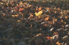 foglie di autunno variopinte - sguardo d'annata del film Immagine Stock Libera da Diritti