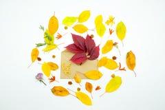 foglie di autunno variopinte su fondo bianco con la busta ed i fiori Fotografia Stock