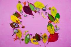 foglie di autunno variopinte su fondo porpora Immagini Stock