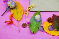 foglie di autunno variopinte su fondo porpora Fotografia Stock