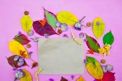 foglie di autunno variopinte su fondo porpora con la busta ed i fiori Immagini Stock