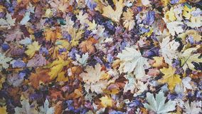 Foglie di autunno variopinte sul fondo dell'erba asciutta archivi video