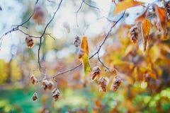 Foglie di autunno variopinte un giorno dell'autunno immagini stock libere da diritti