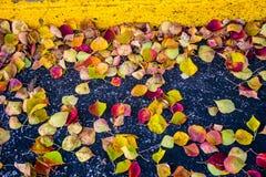 Foglie di caduta che mettono su asfalto accanto al bordo di parcheggio Fotografia Stock