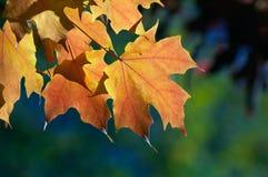 Foglie di caduta di autunno fotografia stock