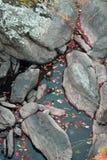 Foglie di caduta a Great Falls Maryland Fotografie Stock