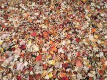 Foglie di caduta su terra a upstate New York fotografie stock libere da diritti