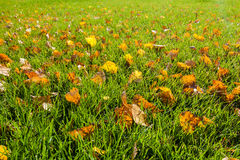 Foglie di caduta sull'erba verde Fotografia Stock Libera da Diritti