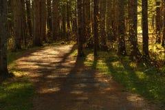 Foglie di camminata di caduta delle ombre dell'albero della traccia di HDR Sussex Immagine Stock Libera da Diritti