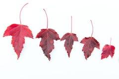 Foglie di colore cadute autunno Fotografia Stock Libera da Diritti