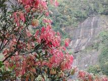 Foglie di colore rosso Fotografia Stock