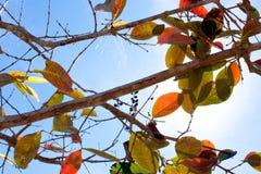Foglie di colore sul fondo del cielo Immagine Stock Libera da Diritti