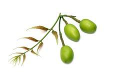 Foglie di erbe del neem, frutta Fotografia Stock