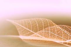Foglie di fantasia di autunno Fotografie Stock
