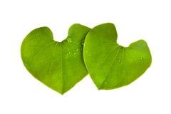 Foglie di forma del cuore isolate su bianco Fotografie Stock Libere da Diritti