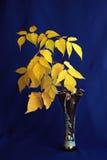 Foglie di giallo Fotografia Stock