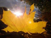 Foglie di giallo contro il cielo blu in autunno Fotografia Stock