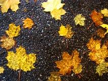 Foglie di giallo contro lo sfondo di asfalto bagnato Fotografia Stock