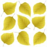 Foglie di giallo del lillà Fotografie Stock Libere da Diritti