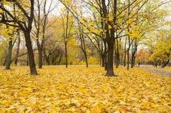 Foglie di giallo del parco di autunno Immagini Stock
