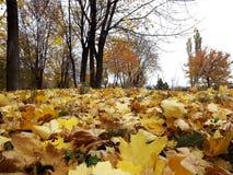 Foglie di giallo dell'oro sulla terra Fotografie Stock Libere da Diritti