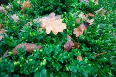 Foglie di giallo su erba verde Fotografia Stock