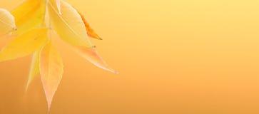 Foglie di giallo su un fondo in bianco. Fotografia Stock