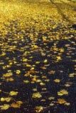Foglie di giallo sulla via Fotografie Stock
