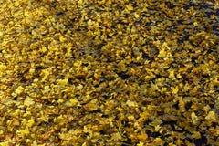 Foglie di giallo sulla via Immagine Stock Libera da Diritti