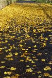 Foglie di giallo sulla via Immagine Stock
