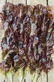 Foglie di insalata Immagini Stock