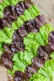 Foglie di insalata Fotografia Stock