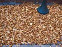 Foglie di inverno di autunno Fotografia Stock