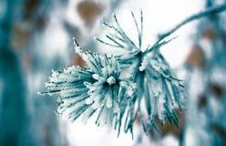 Foglie di inverno nei precedenti dell'estratto del gelo Fotografia Stock Libera da Diritti