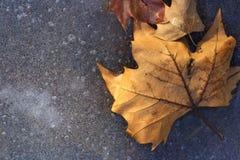 Foglie di inverno su ghiaccio di un lago Fotografia Stock