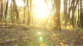Foglie di marrone di autunno stock footage