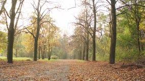 Foglie di marrone di autunno archivi video