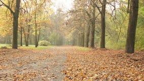 Foglie di marrone di autunno video d archivio