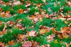 Foglie di marrone di autunno Fotografia Stock Libera da Diritti