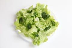 Foglie di menta e dell'insalata Fotografie Stock Libere da Diritti