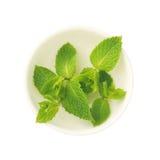 Foglie di menta in un piattino su un fondo bianco Fotografia Stock