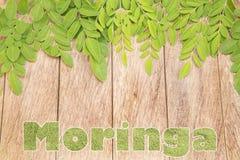 Foglie di Moringa - moringa oleifera immagini stock