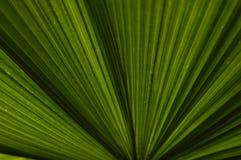 Foglie di palma Immagine Stock Libera da Diritti