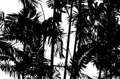 Foglie di palma Fotografia Stock