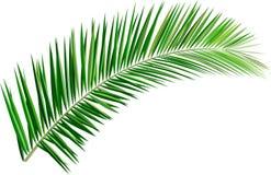 Foglie di palma Immagini Stock Libere da Diritti