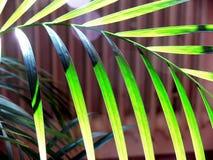 Foglie di palma alla forte luce posteriore immagini stock